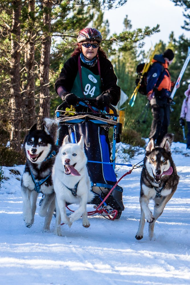 Sled Dog Racing in the Cairngorm National Park