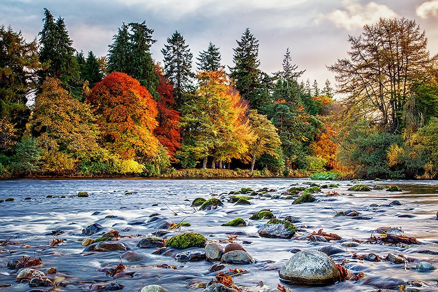 Trees in autumnal colours beside the river Ness
