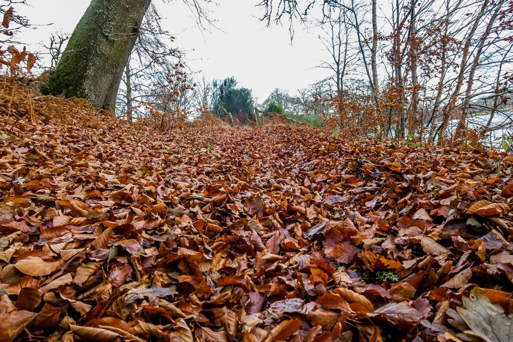 Autumn Leaves on the path