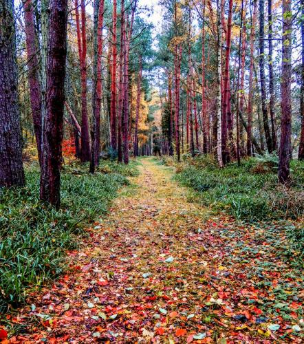 A leafy path of autumnal leaves